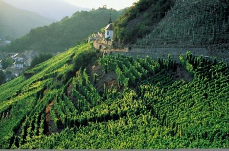 alsace-vineyards